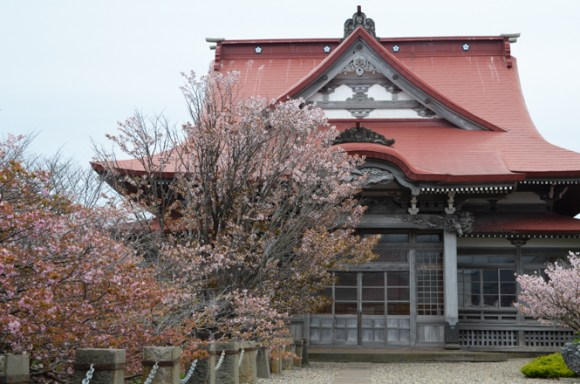 Cherry Blossom of Seiryuji Temple in Nemuro