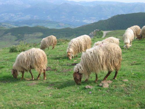 Asturian_scene_PD