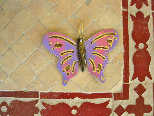 Butterfly_on_floor