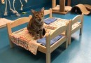 Ikea donates doll beds for cats at animal shelter
