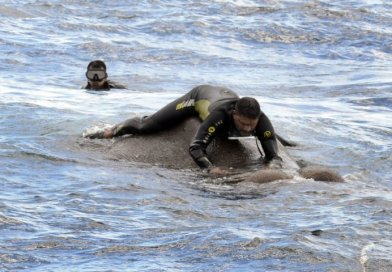 Elephant Rescued After Being Dragged Out To Sea By Strong Current