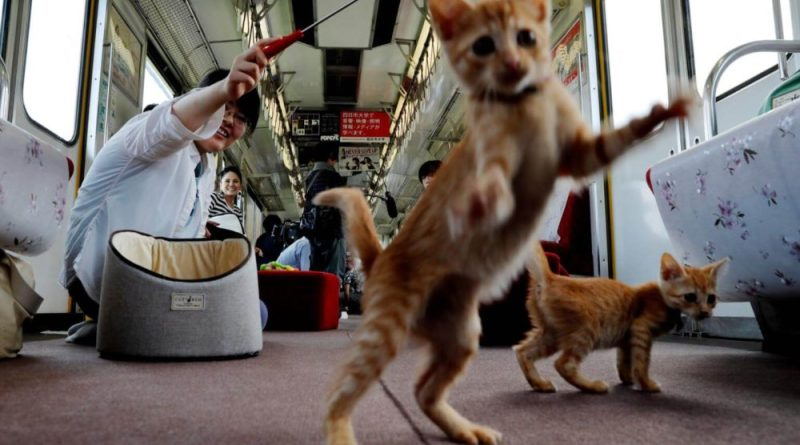 What It's Like to Ride Japan's Cat Café Train
