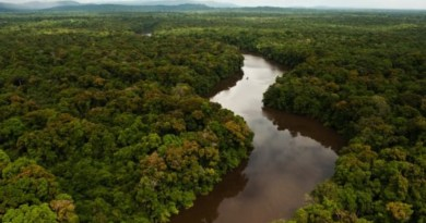 The Largest Ever Tropical Reforestation Is Planting 73 Million Trees