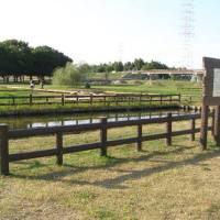 深北緑地「北河内の原風景の代表といえるレンコン畑復活プロジェクト」の展示会『蓮根栽培の一年』
