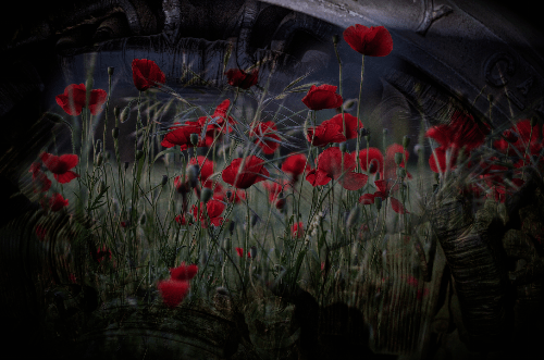 Poppies and Mechanicals