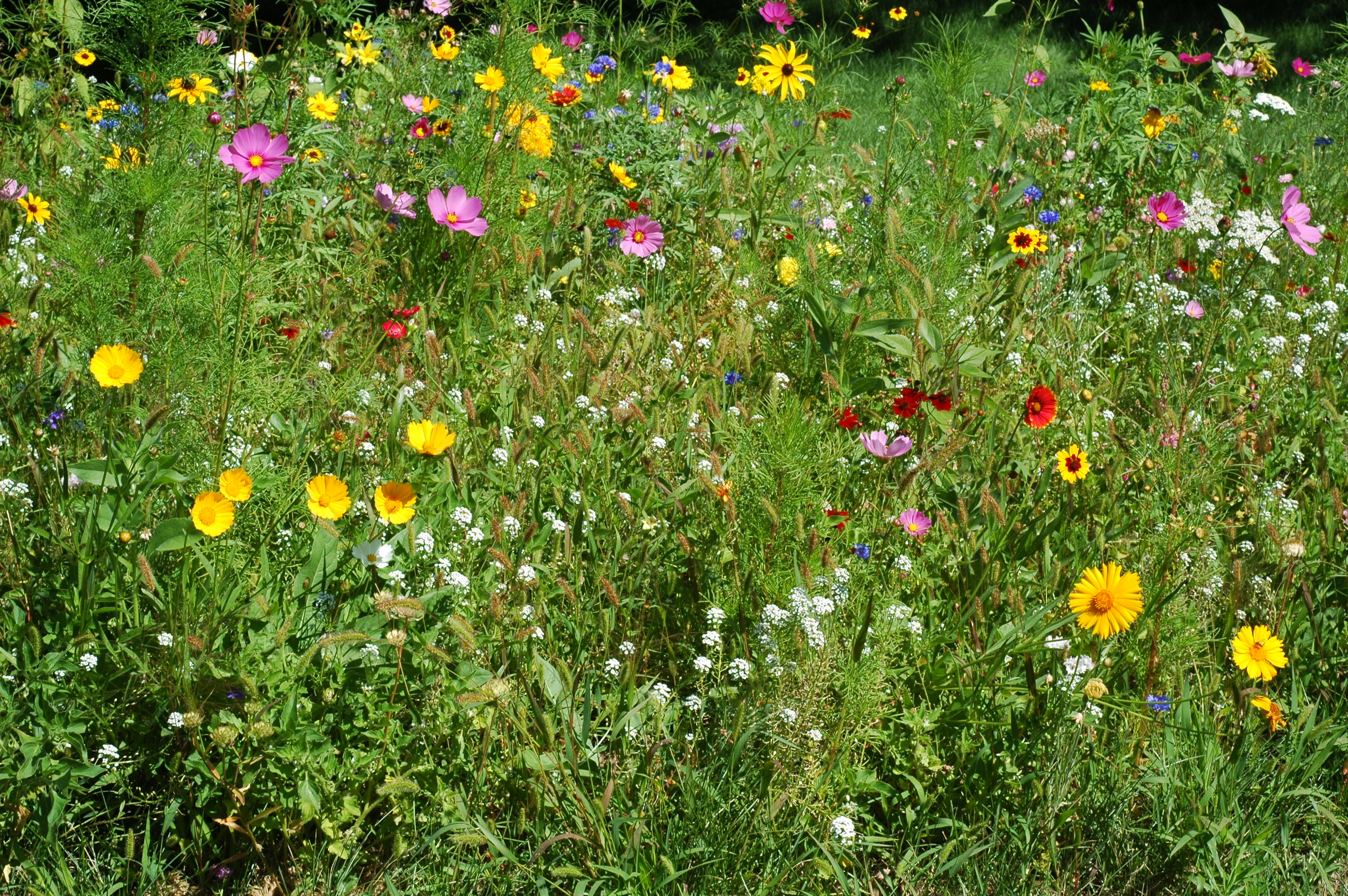 Wildflowers, which one do you like?