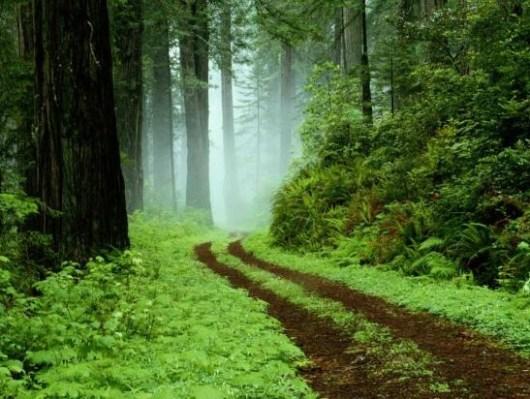 forêt au moyen âge