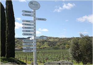 image of hopland wineries