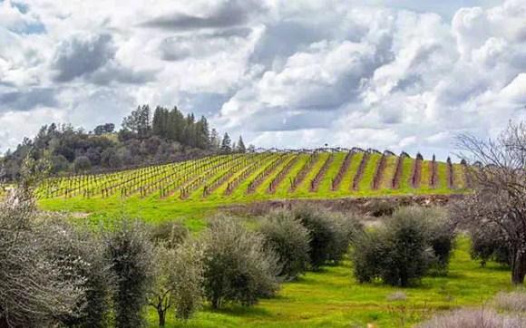 Sobon estate wines