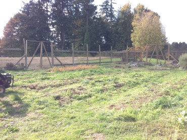 Bayview Garden: before tilling