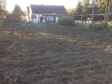 Bayview Garden: after tilling.