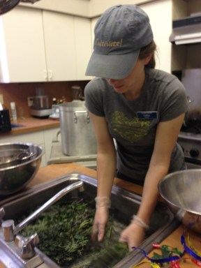 Lissa washing kale that will be blanched, then frozen, for winter.