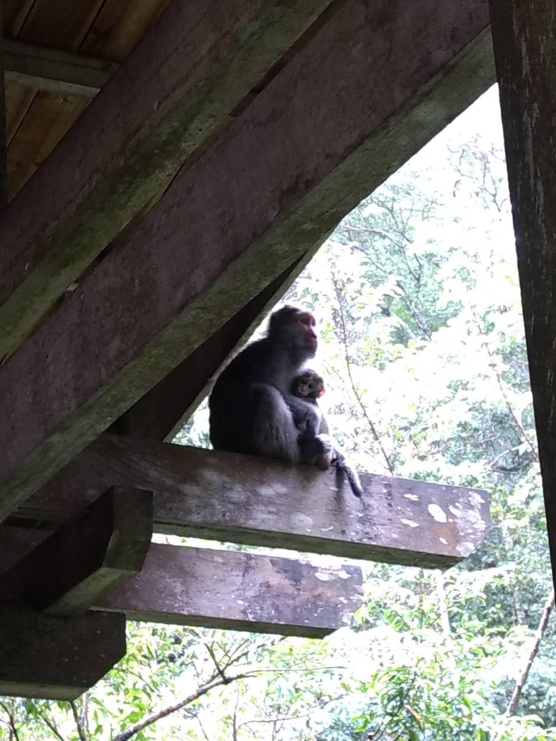 福山植物園生態之旅