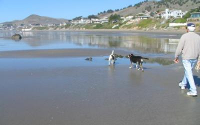 Beaches And Leashes