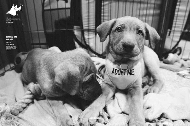 Gooddogs-Clothing-SVENxGUDRUN