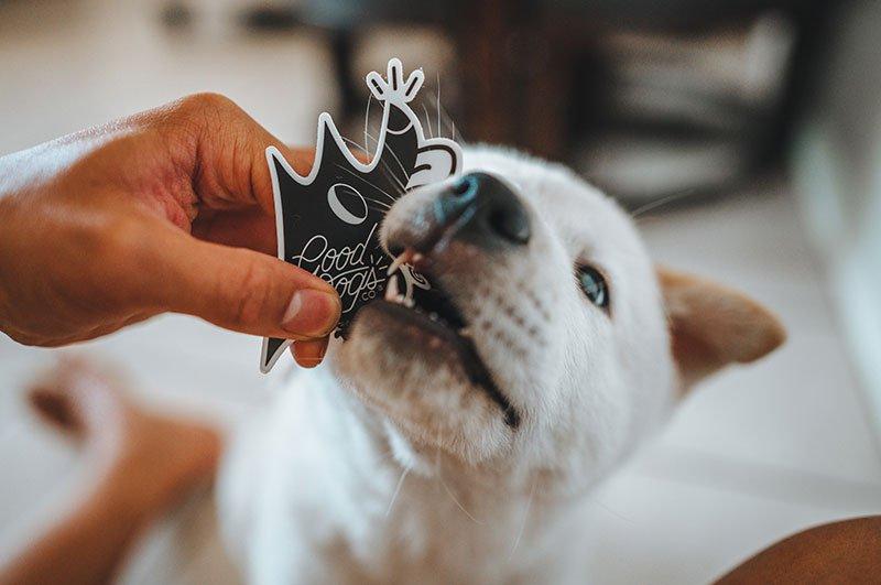 Gooddogs-Clothing-JayKoala-513