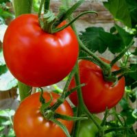 tomatoes, red, vegetables