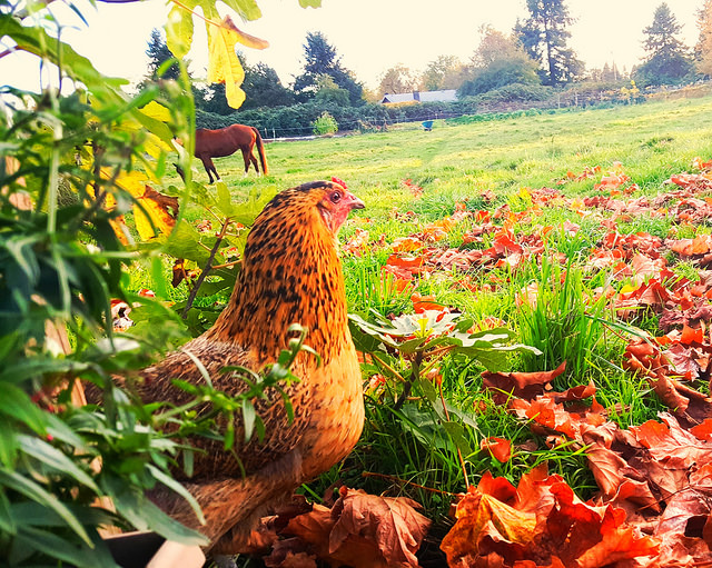 Organic Produce and cage free farm fresh eggs