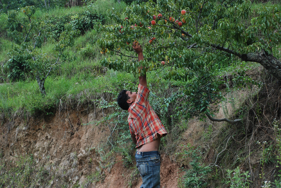Our driver doing some monkey antics, trying to pluck ripe apricots for us