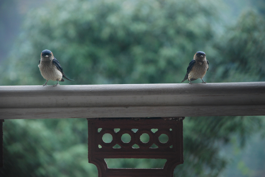 The two birdies in our balcony