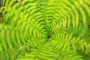 Services: top view of the heart of a fern
