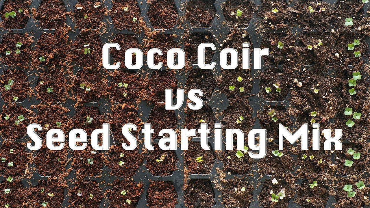 Coco Coir vs Seed Starting Mix