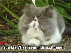 You are wise, Grasshopper