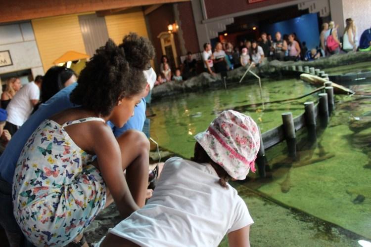 Dolfinarium-Roggenrif-Roggen en haaien in het Dolfinarium