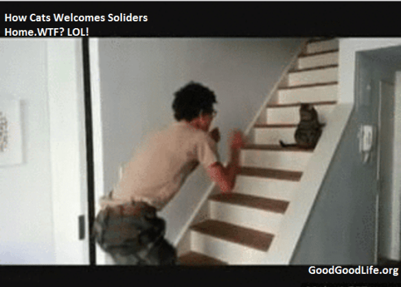 cat welcome home2