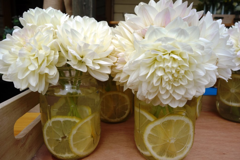 Dahlias and lemon slices in mason jars