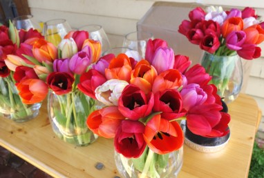 Tulips in glass vessels