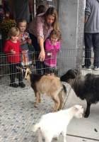 Petting Zoo at GoodHearts Petting Zoo at Reading Fall Street Faire