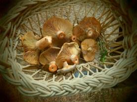Veld and Sea mushroom foraging