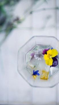 Botanical Cocktail Workshop Cape Town