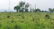 Udawalawe National Park (2)