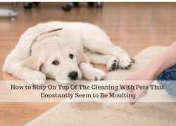 How to Stay On Top Of The Cleaning With Pets That Constantly Seem to Be Moulting