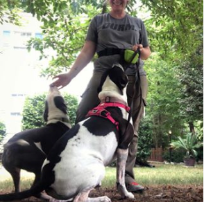 Dog trainer sit stay