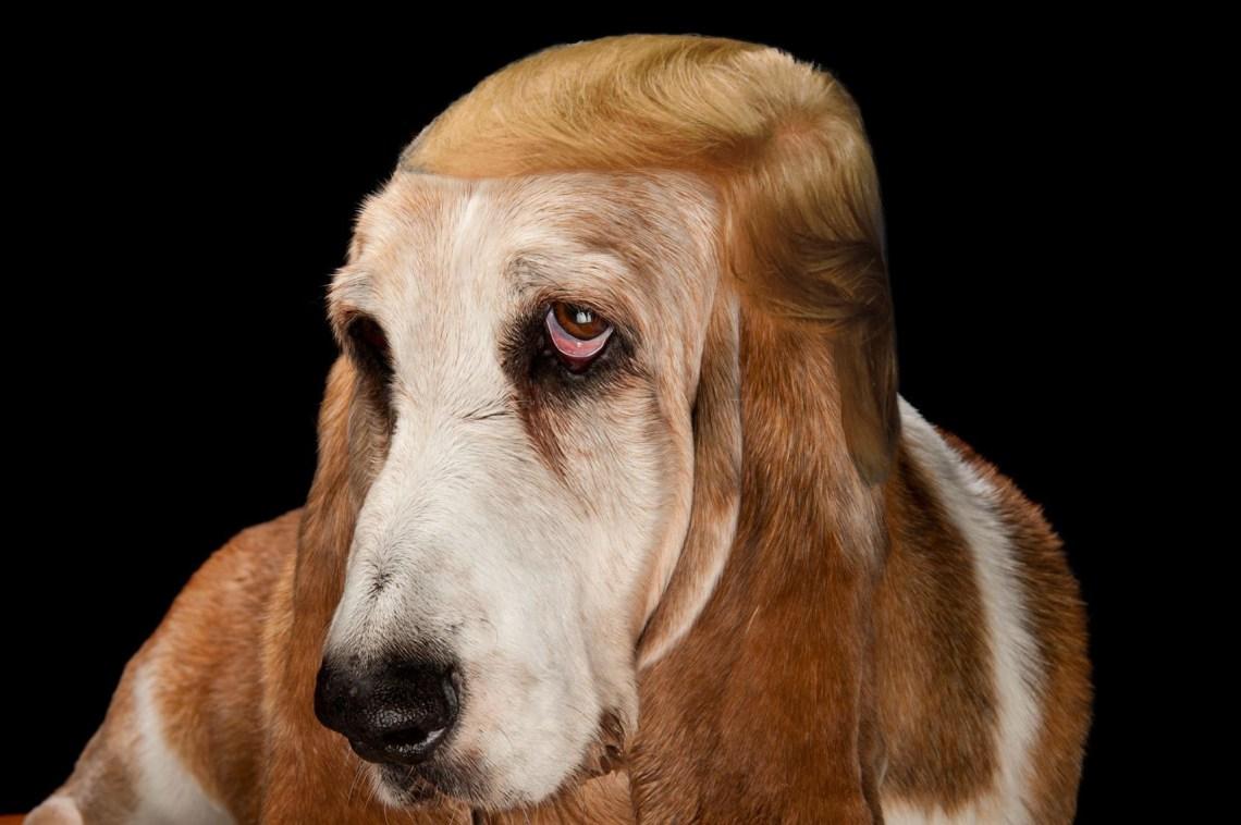 dog hair 4.jpg