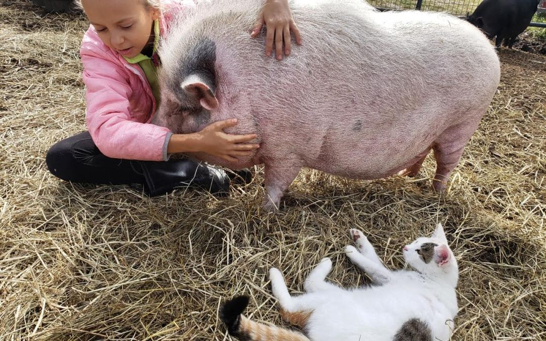 Dedicated 11 Year Old Spends Her Free Time Helping Animals