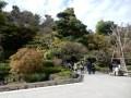 鎌倉の長谷寺の紅葉とライトアップの時期!海光庵のカレー食べてみた!