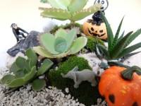 ハロウインの飾り付けを多肉植物の寄せ植えで盛り上げよう!