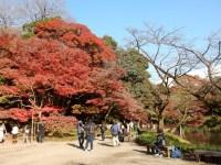 小石川後楽園の紅葉2016の見頃は&しだれ桜や藤、花菖蒲の開花時期は