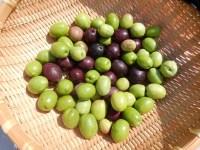 オリーブの実をあく抜き 重曹で最短に!みそ漬けでクセになる食べ方
