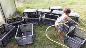 Washing the harvesting baskets
