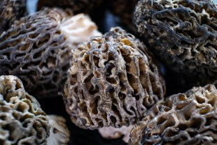 Fresh Morel Mushrooms