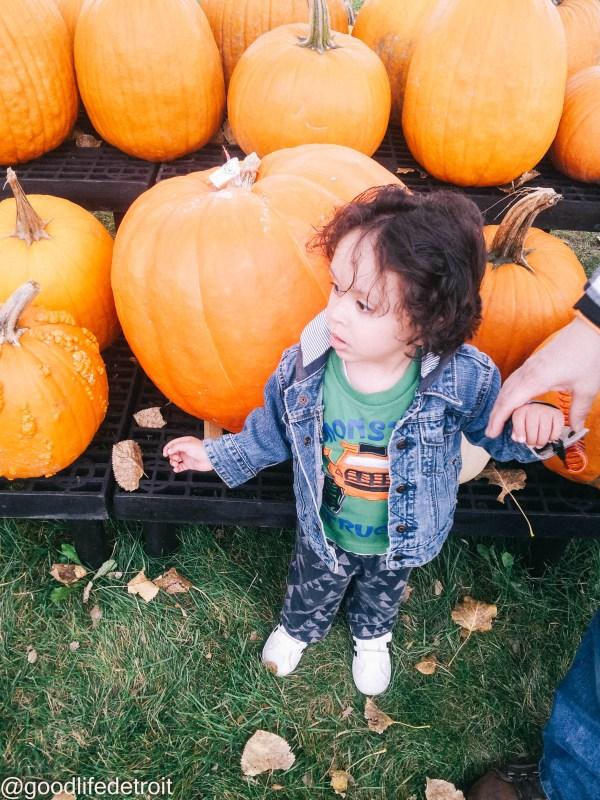 Metro Detroit pumpkin patch