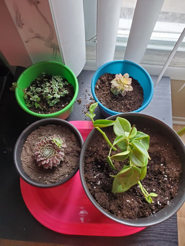 planting an indoor garden