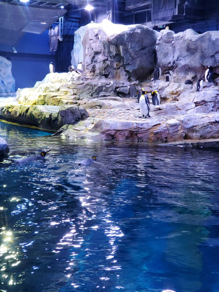 Detroit zoo penguins