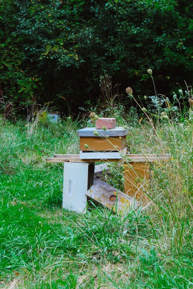 Bee Keeping Detroit