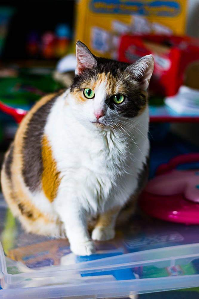 Pet Memorial Idea: Custom Pet Painting